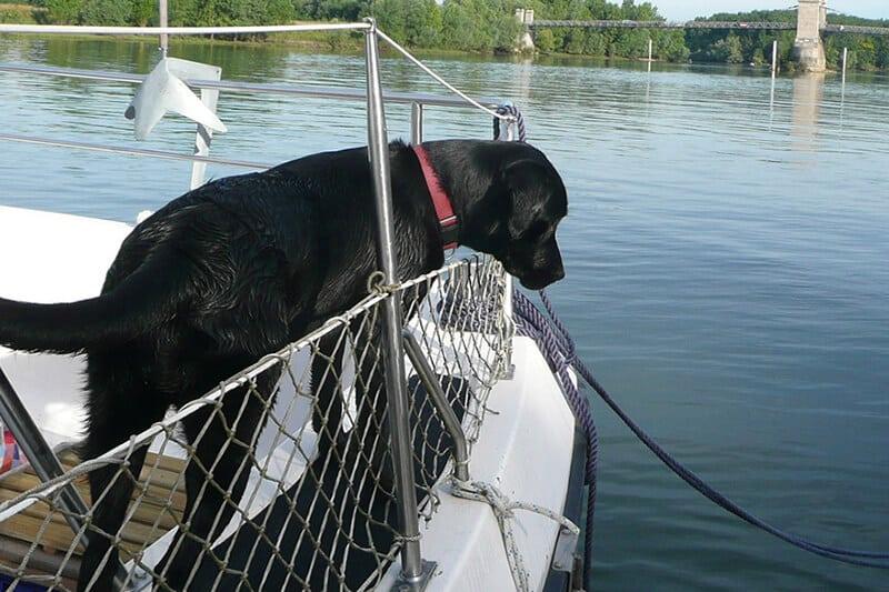 Hausboot mit Hund - Urlaub mit Hund auf einem Hausboot