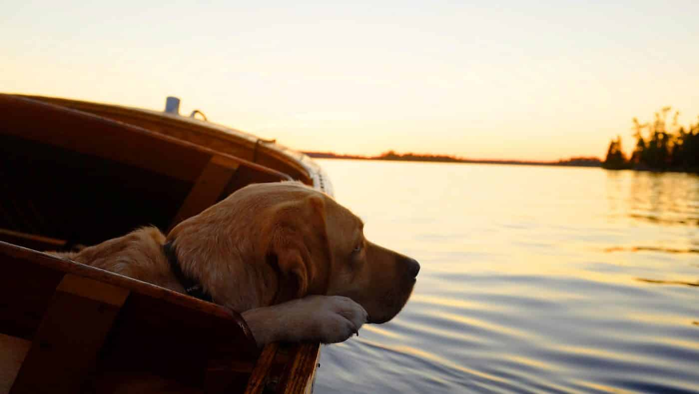Holiday with your dog - houseboat