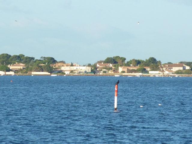 Découvrir l'étang de Thau en bateau sans permis