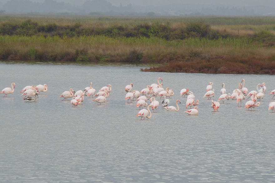The Charm of the Camargue