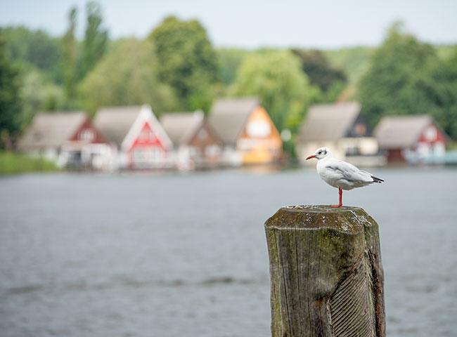 Oiseau sur les lacs d'Allemagne