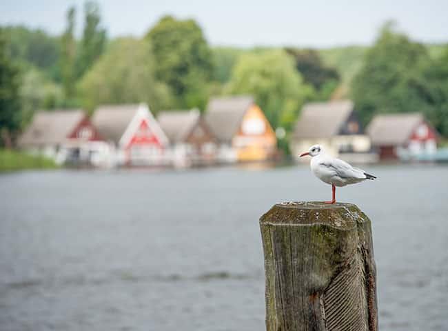 Bird in the German lakes